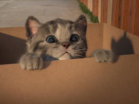 Ist sie nicht süß? Little Kitten, das kleine Katzenbaby, ist auf der Suche nach einem Zuhause und einem Spielgefährten