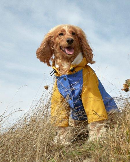 Mäntel für Hunde? THE PAINTER'S WIFE meint JA und lanciert den ökologischen Friesennerz für Hunde