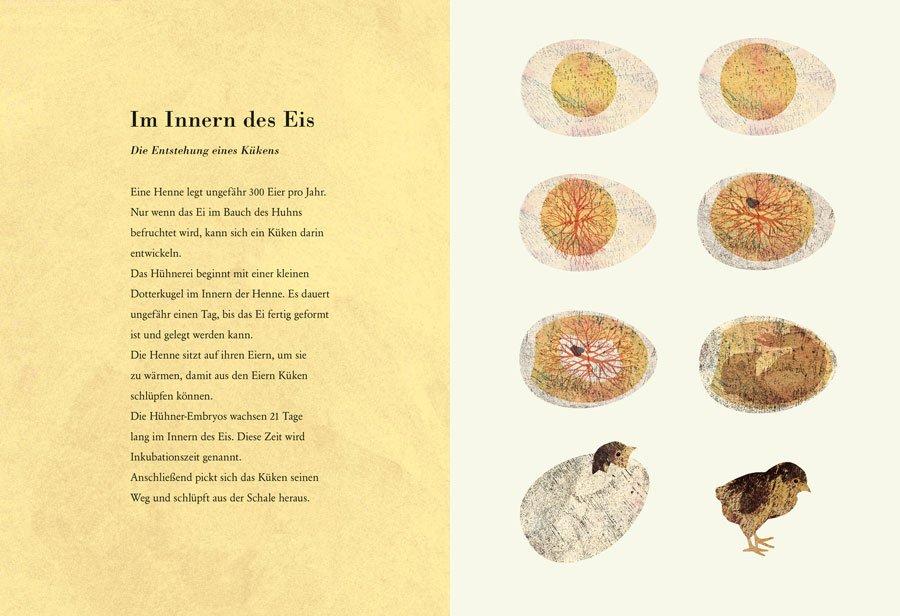 Passend zu Ostern erklärt Britta Teckentrup in künstlerischen Bildern, was z.B. in einem befruchteten Hühnerei passiert. © Prestel Verlag