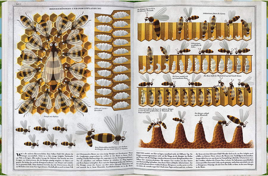 Witzig und lehrreich – anhand der originellen Illustrationen macht Naturkunde richtig Spaß © Gerstenberg Verlag