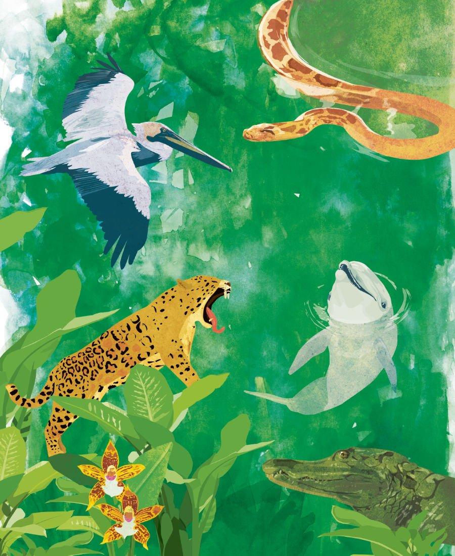 Alexander von Humboldt ist der erste, der die verschiedenen Lebensräume mit ihren Tieren und Pflanzen in einen Zusammenhang setzt.