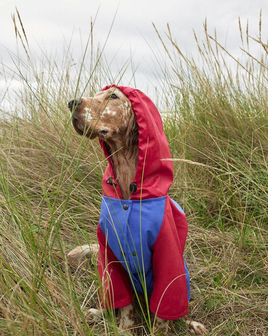 Snoop Doggy Dogg: Hippe Hunde kleiden sich nachhaltig in der neuen GREEN PAW Regenjacke von THE PAINTER'S WIFE